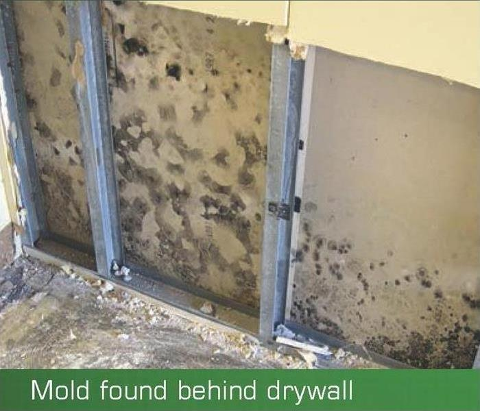 Mold Remediation Does Your Laredo Home Have A Mold Problem?